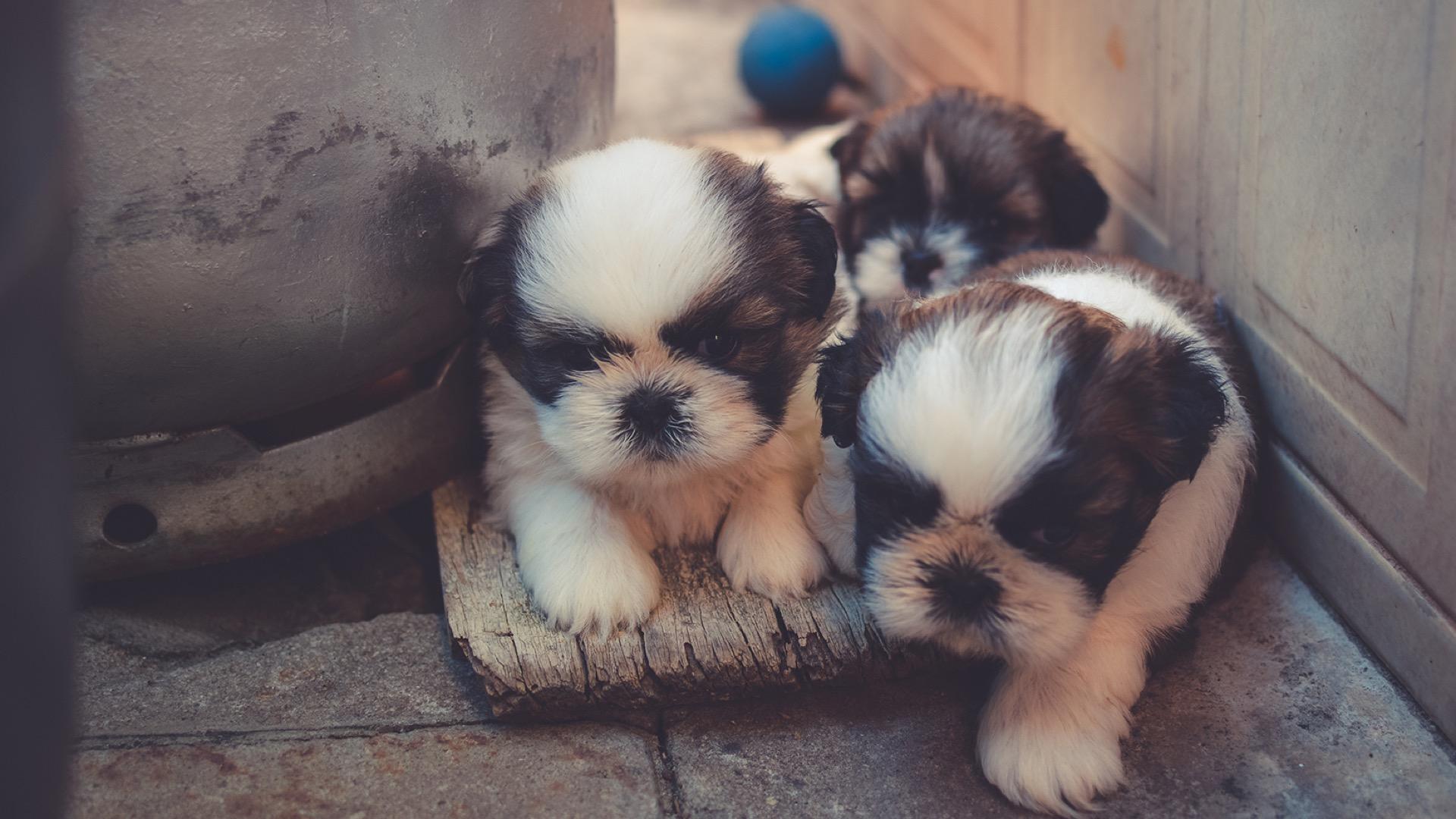 Three Cute Puppies Signage