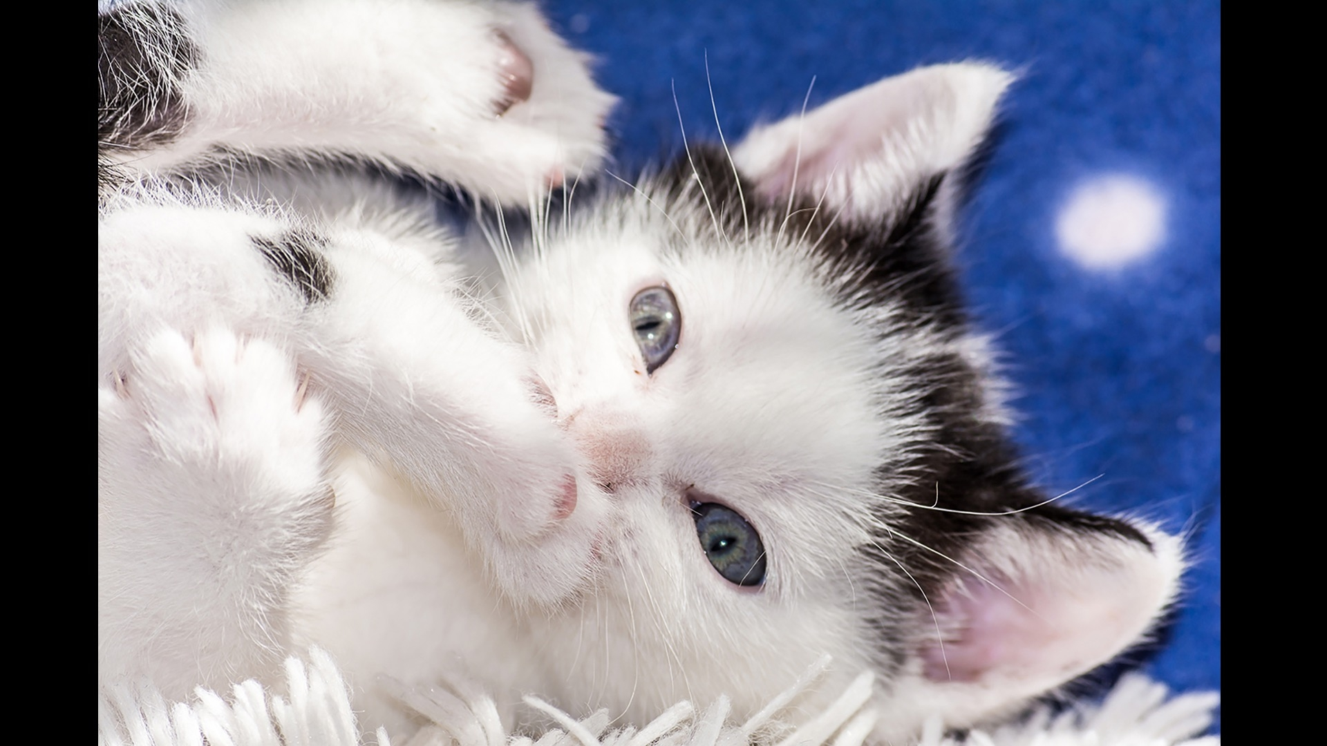 cat chewing on toenail