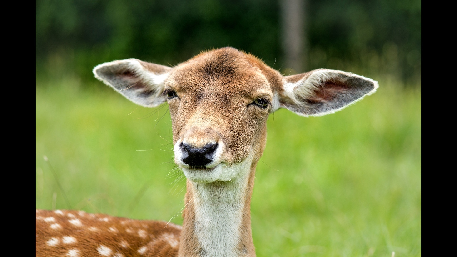 close up of fawn