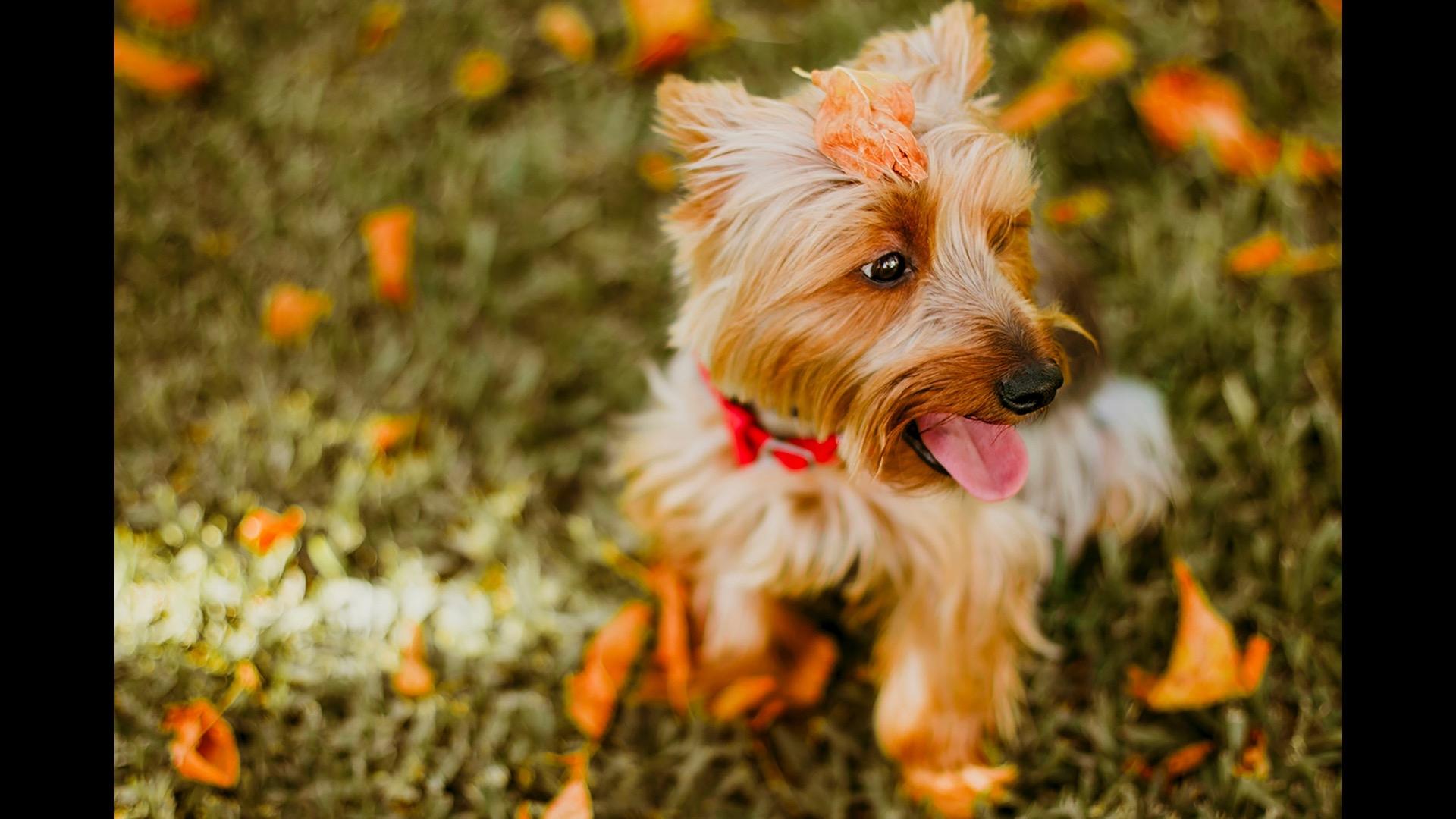 dog with leaf on head