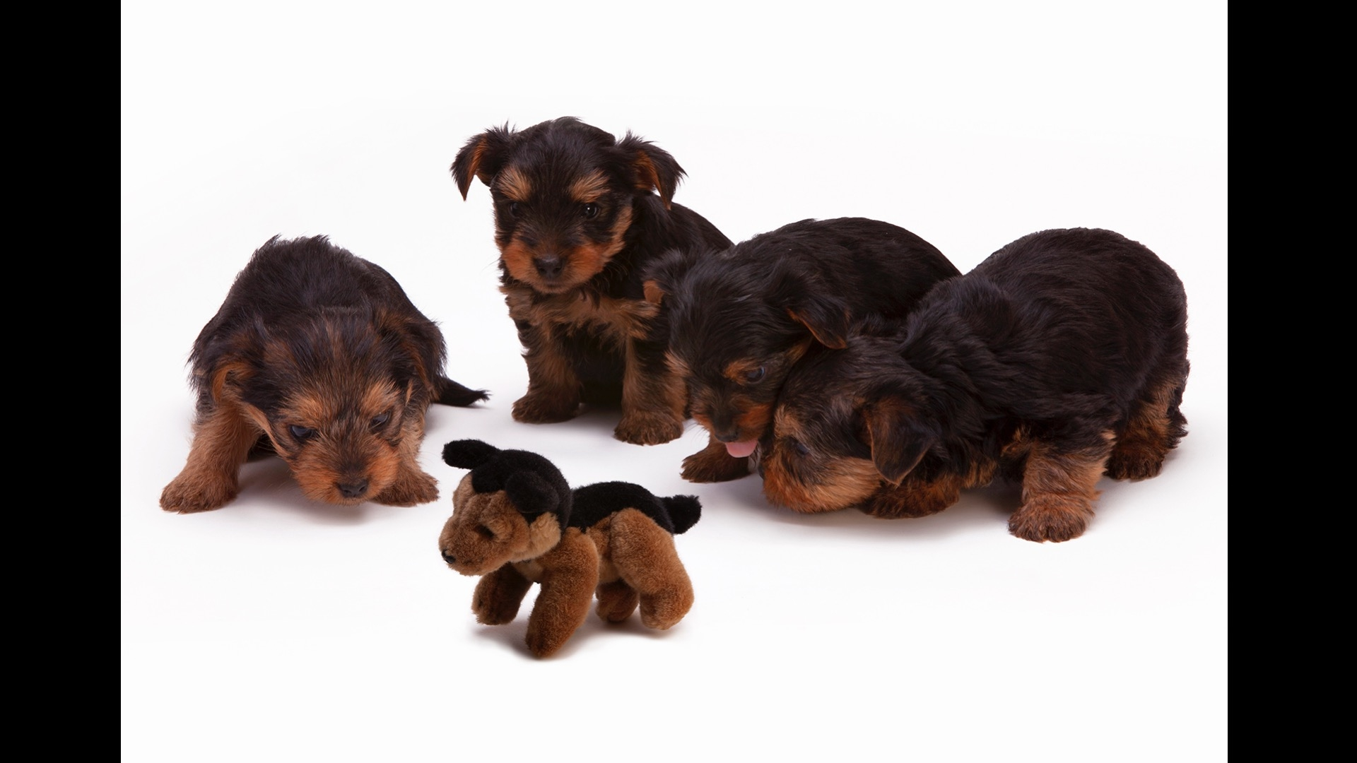 four puppies and a stuffed puppy