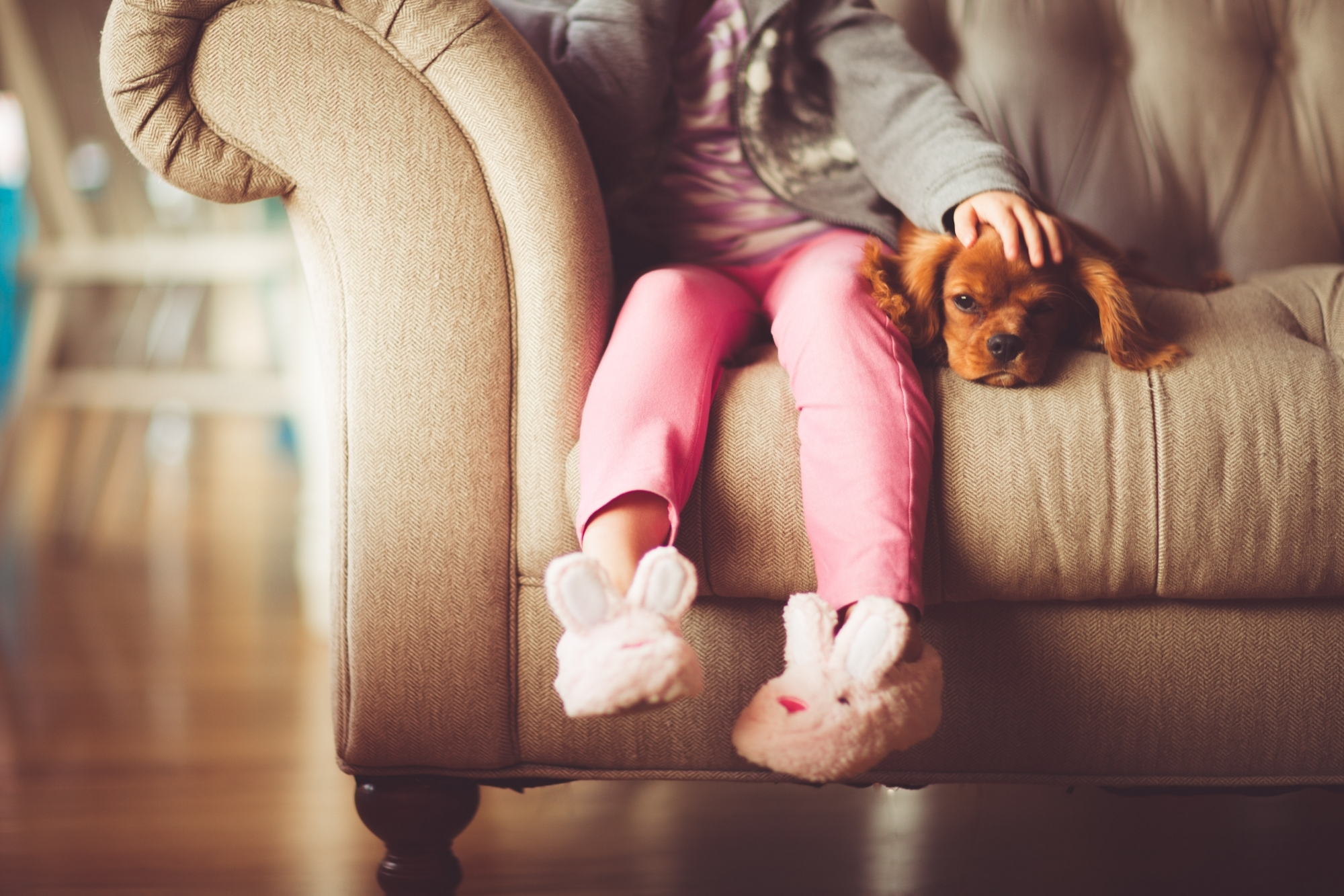 girl petting spaniel on couch