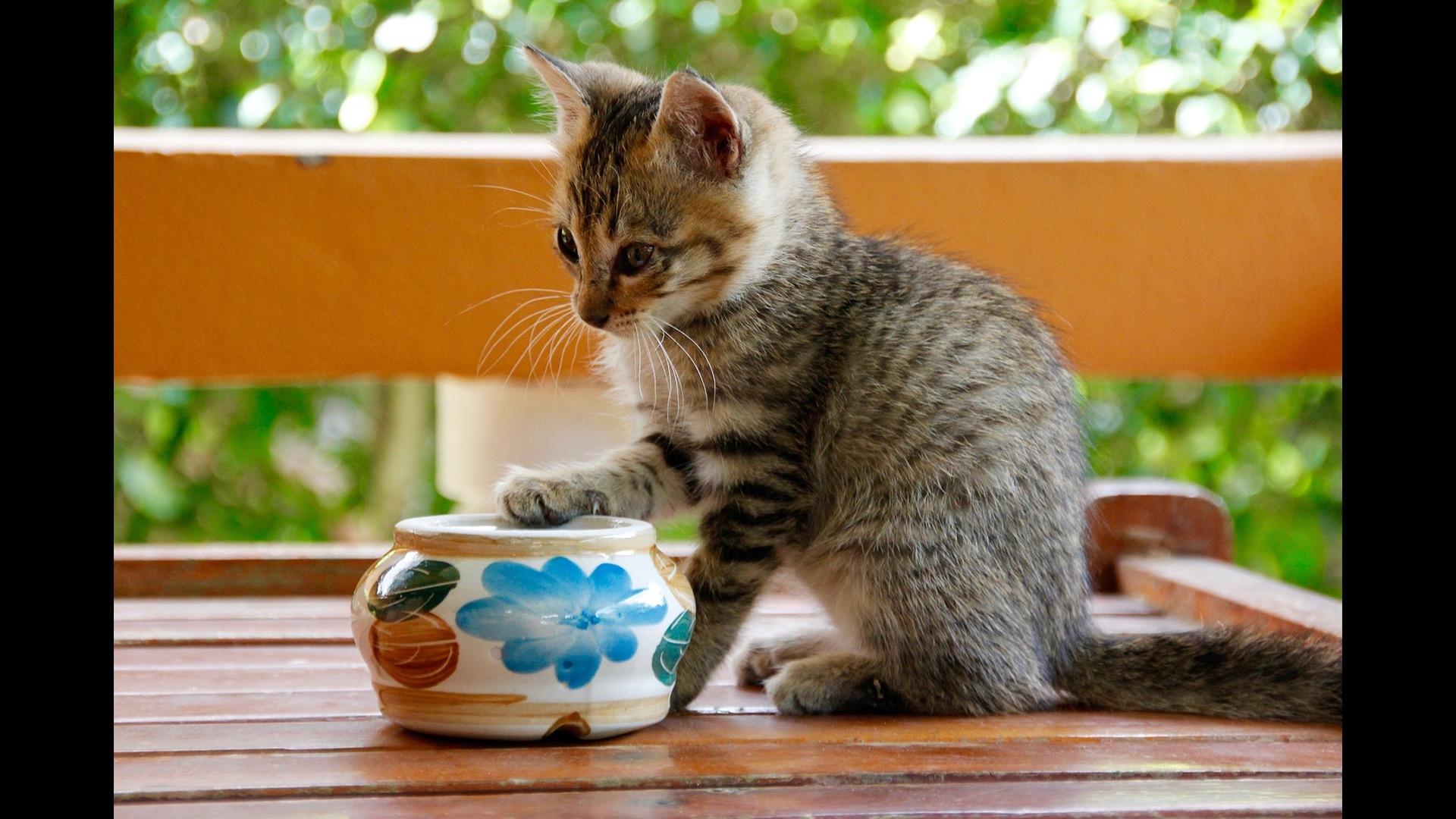 kitten and jar