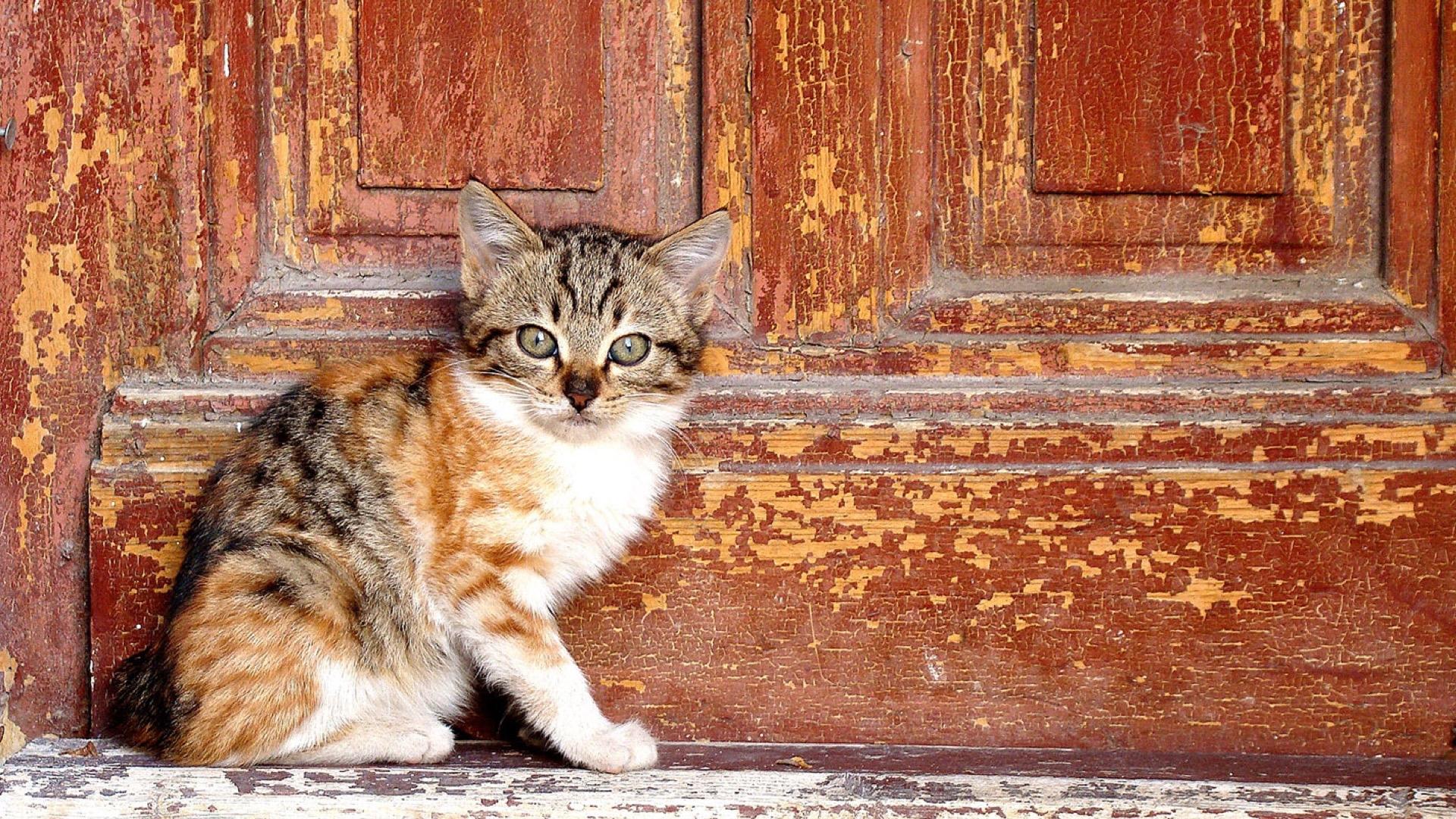 kitten by red door