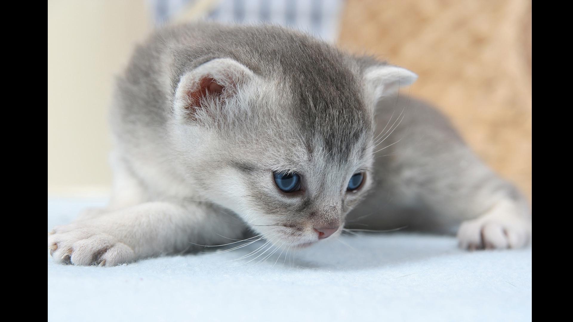 kitten looking sorry