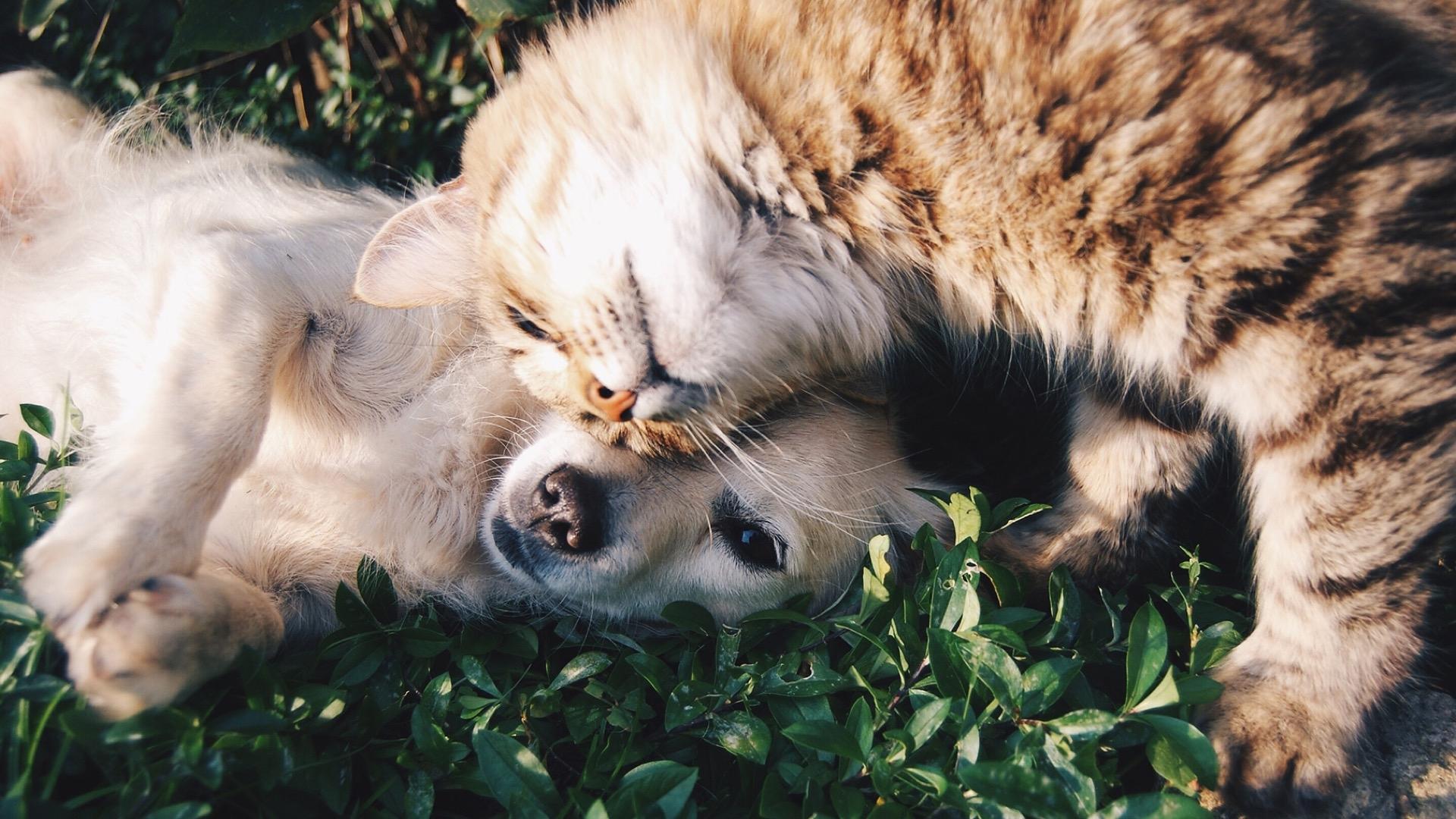 kitten nuzzling puppy
