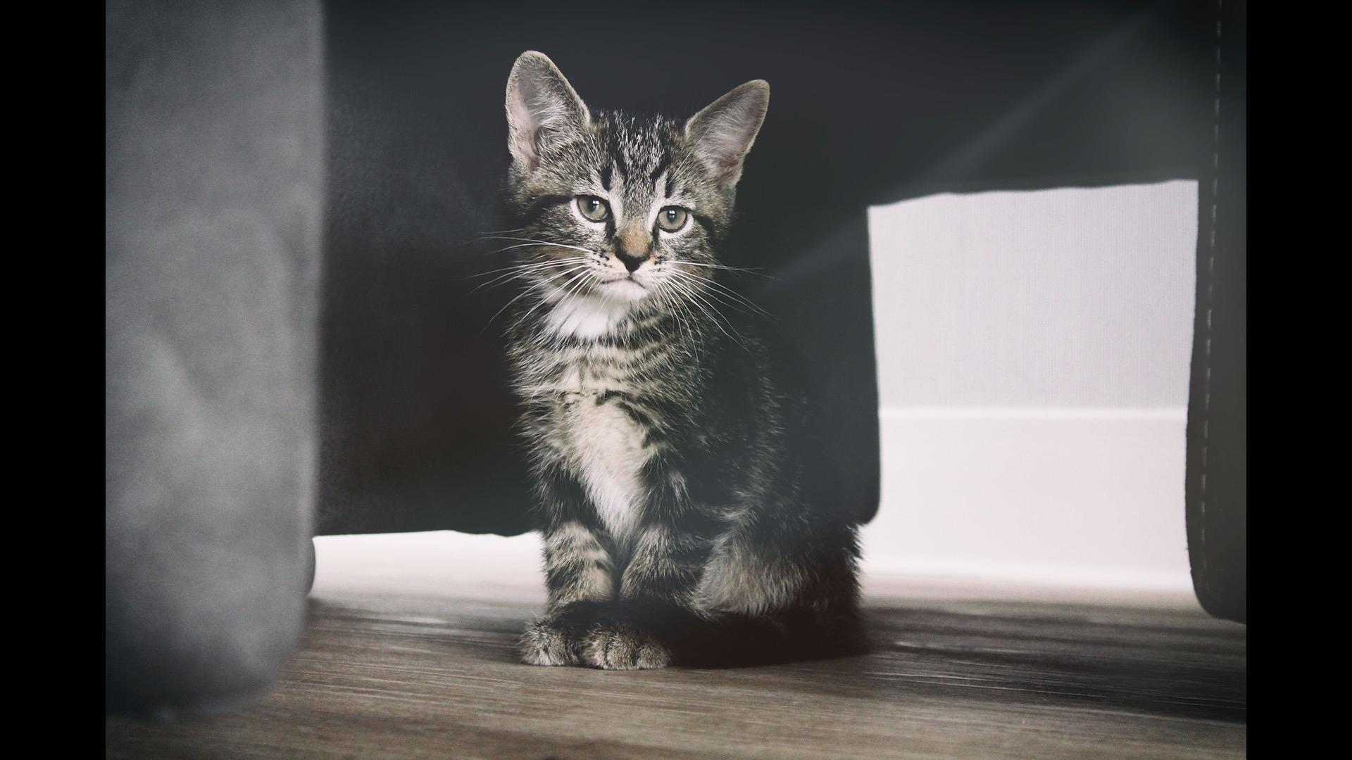 kitten under couch