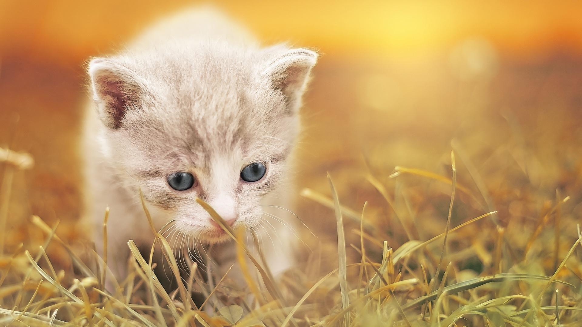 kitten walking on straw