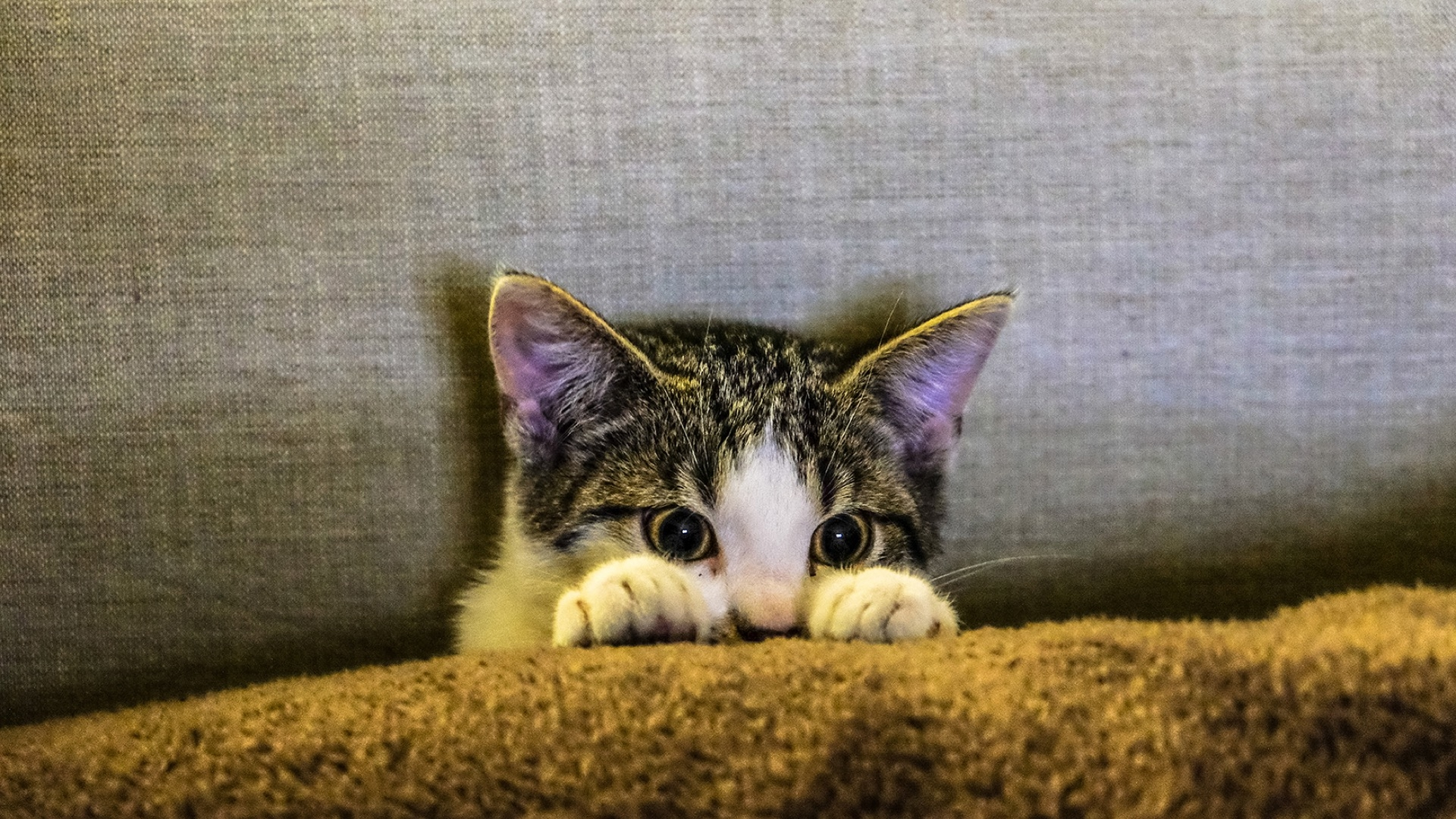 kitty peeking out from blanket