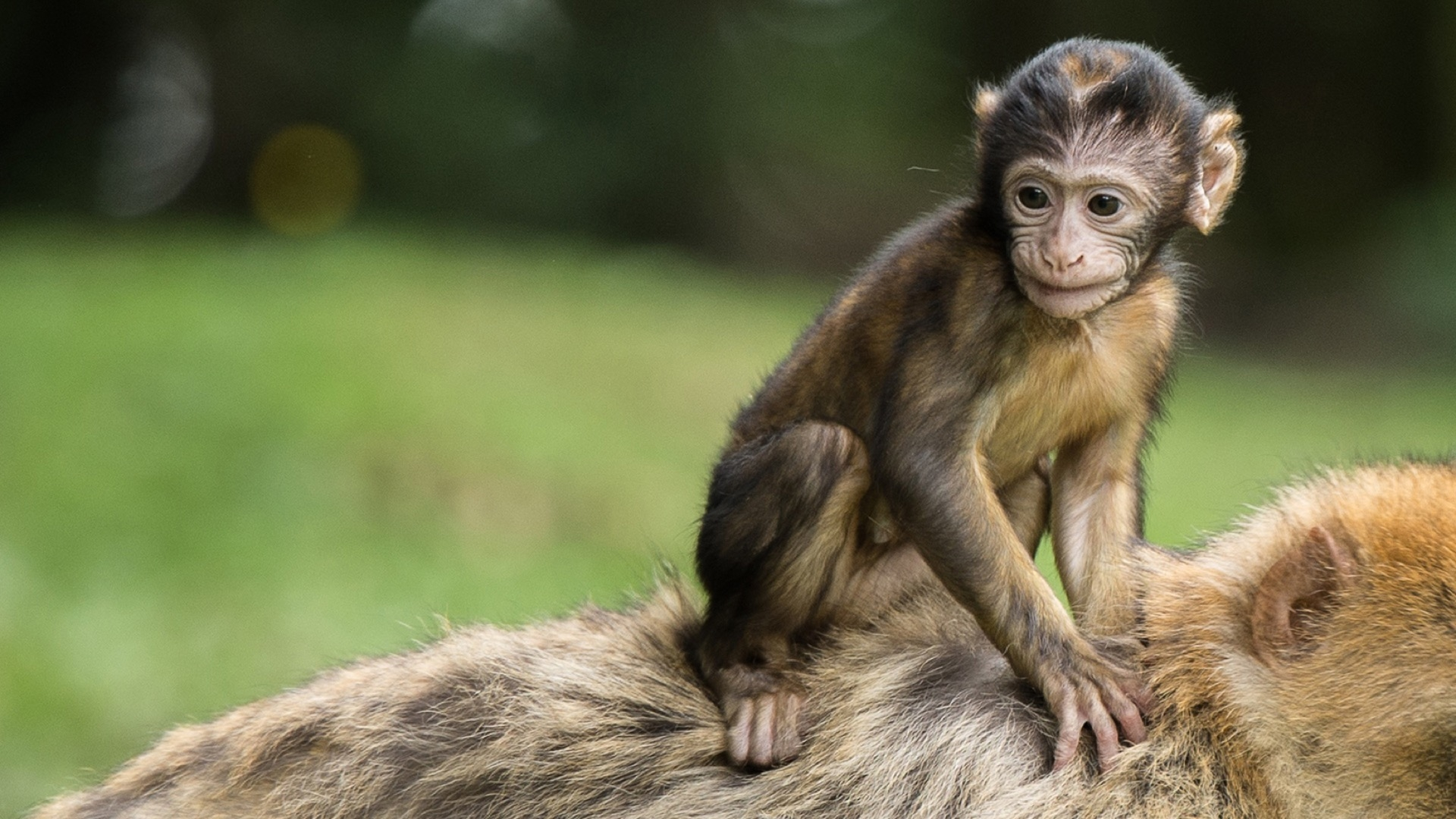 monkey baby number 2