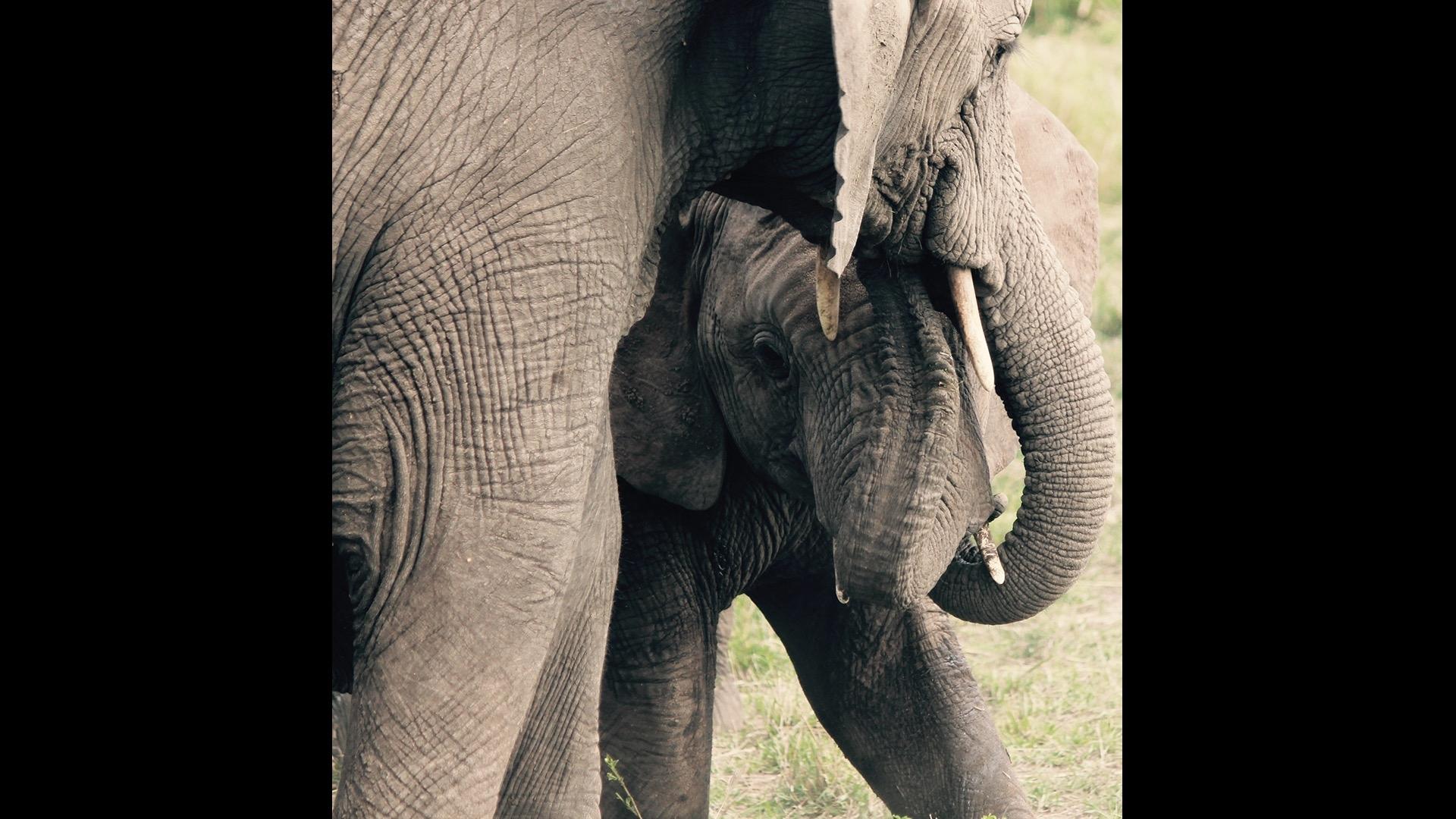 mother nuzzling baby elephant