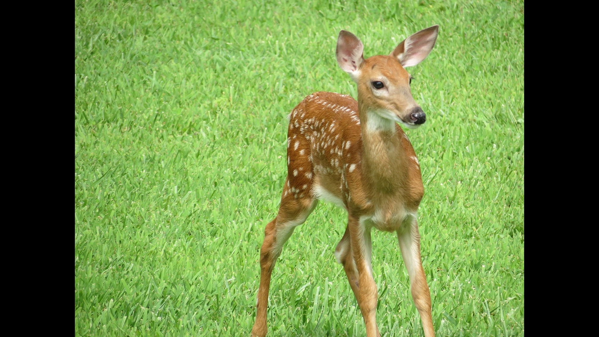 one last fawn