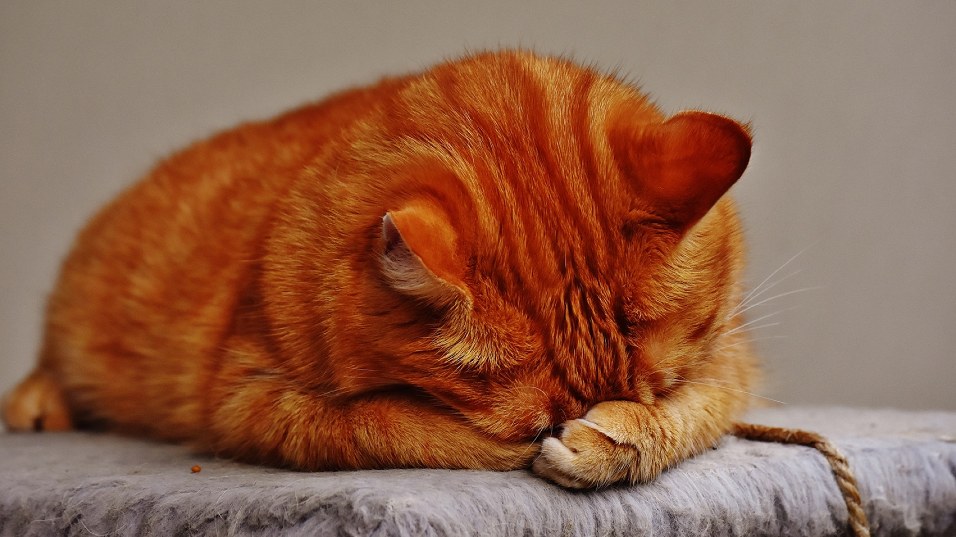 orange kitten hiding its eyes