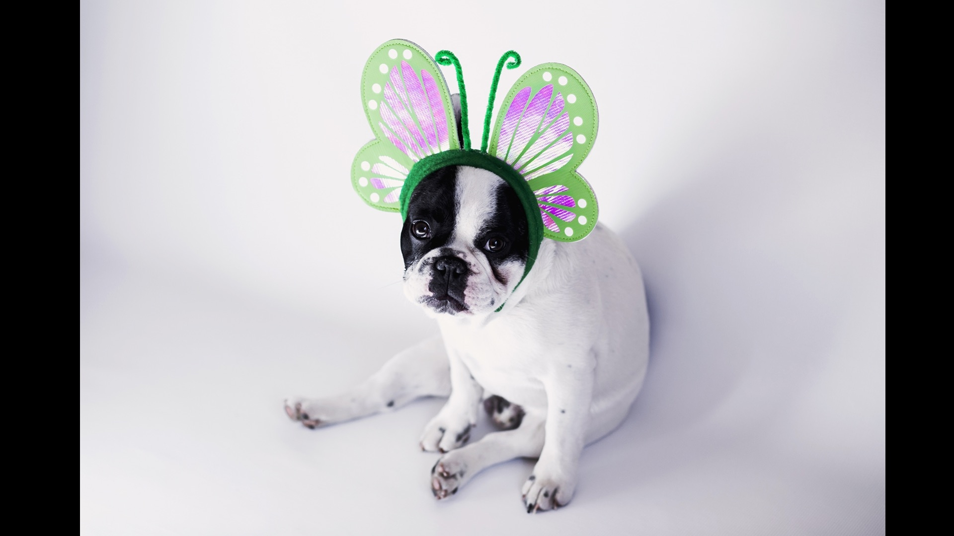 puppy with butterfly wings