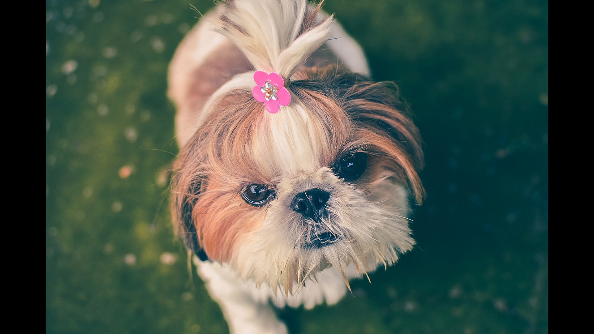puppy with pink flower in hair