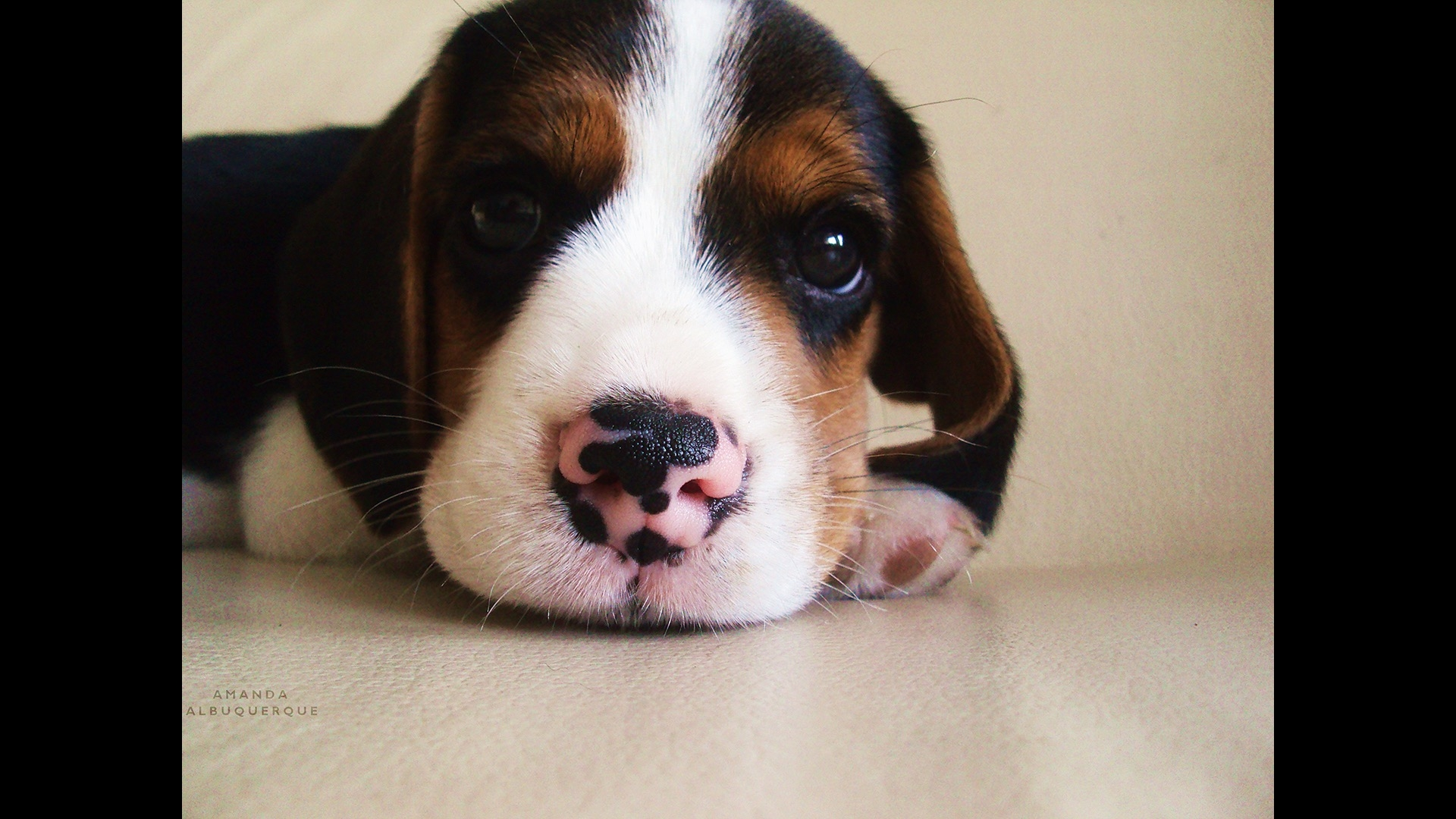puppy with spotted nose