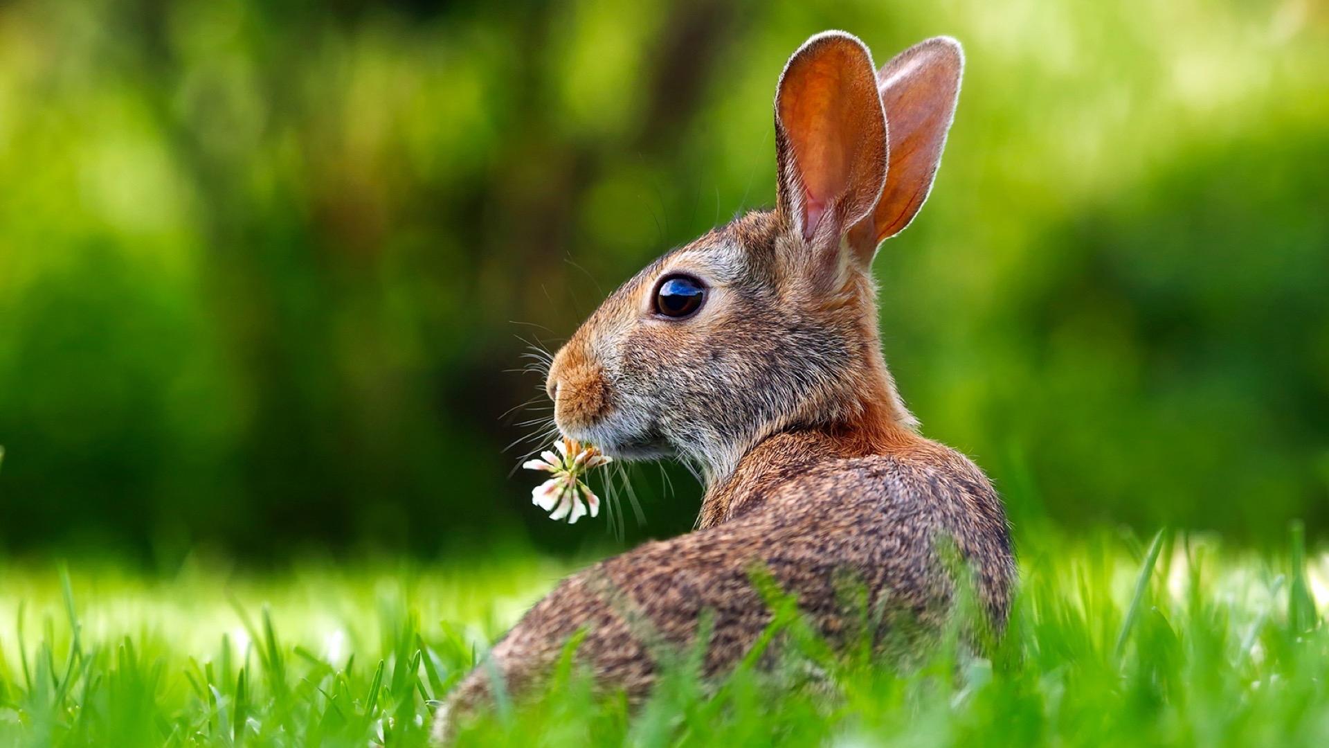 rabbit eating flower