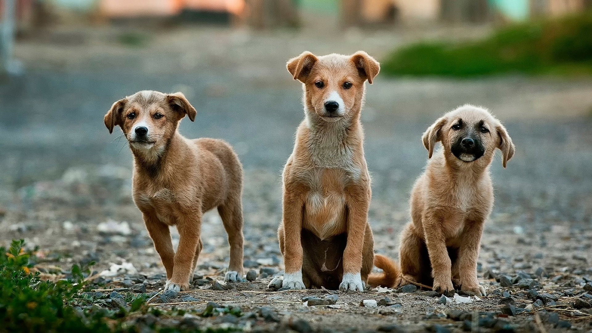 three mutts