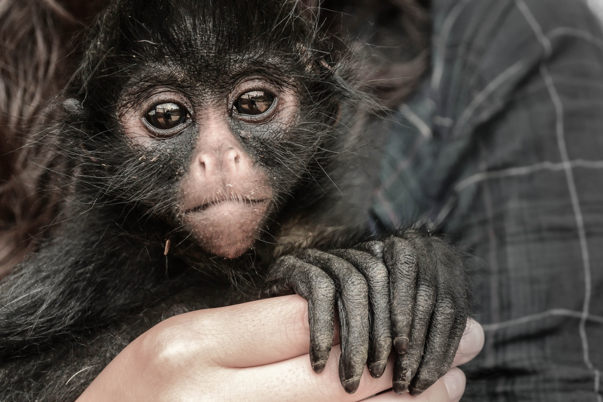 weird looking monkey with long fingers