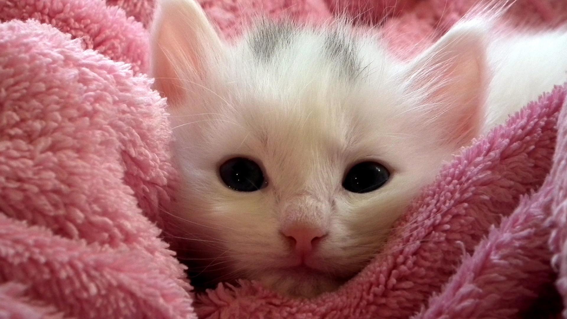 white kitten in pink towel