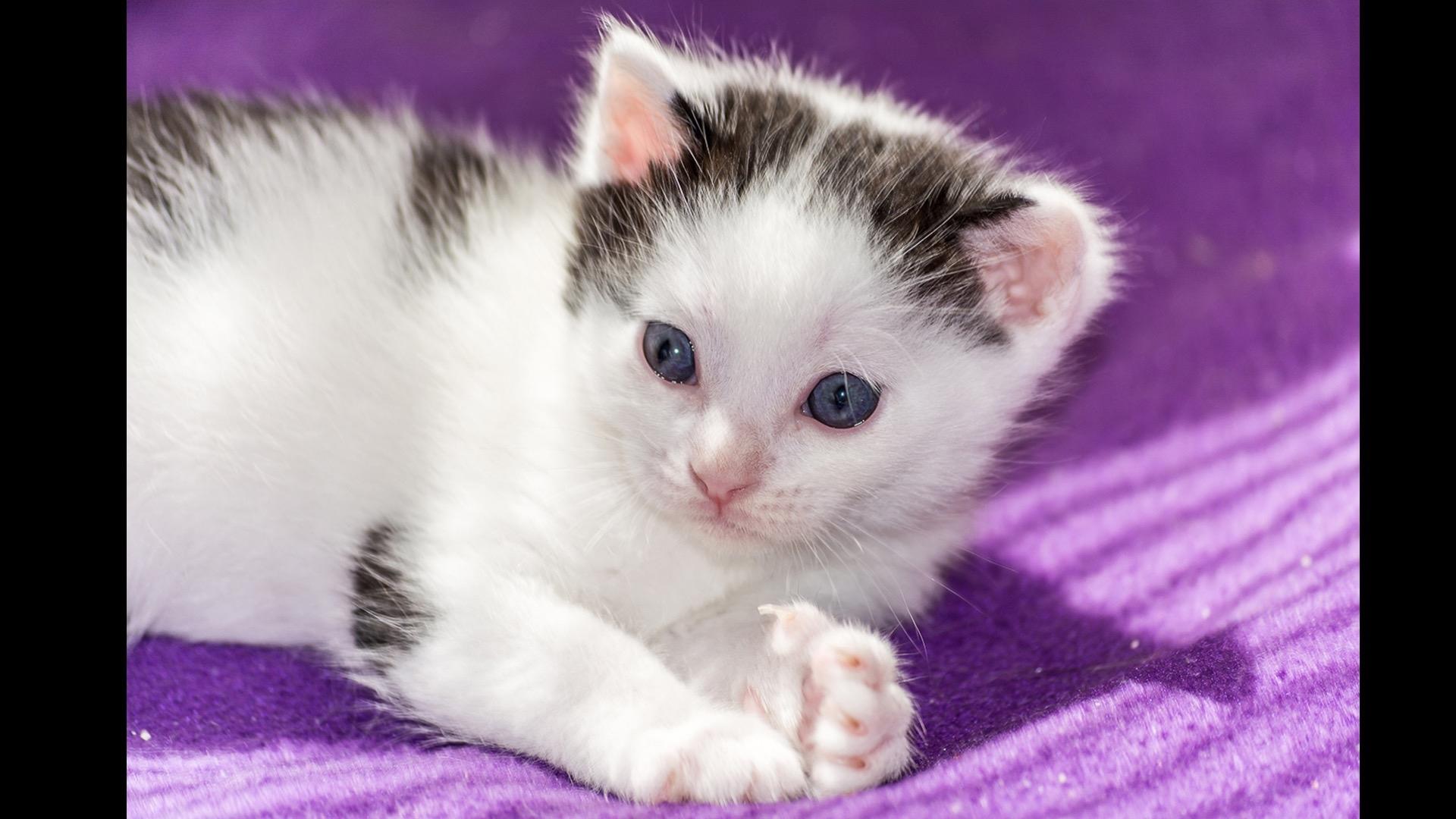 white kitten with black spots